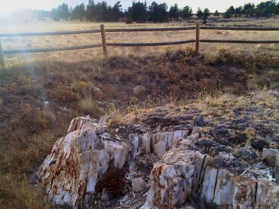 Florissant Fossil Beds redwood stump Dec 2010