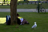 Herring gulls, students, and bike, University of Sussex, UK, April 2014