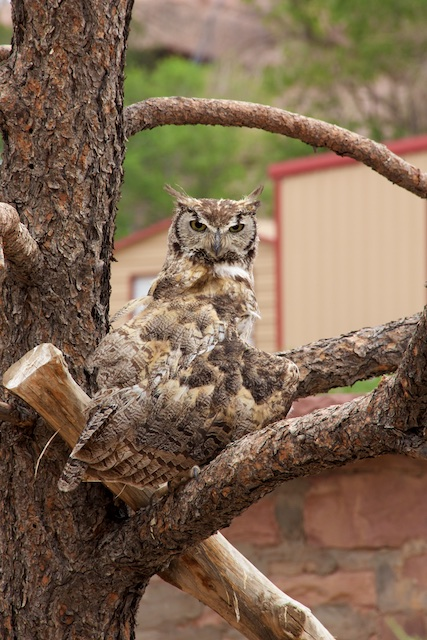 Navajo Nation Zoo Cares for Native Animals