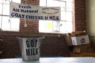 Denver Urban Homesteading Mini Moos goat milk stand Feb 2015