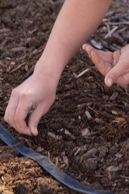 Spring Gardening at UrbiCulture's Sunnyside Garden