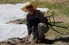 McGlone Workday June 27, Nick Gruber of Produce Denver adjusts irrigation lines 2, IMG_1259