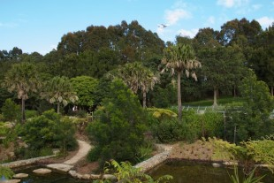 Sydney Park restoration with plane, Sept 2015